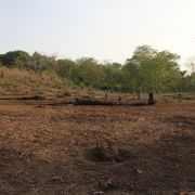Cleared land plot